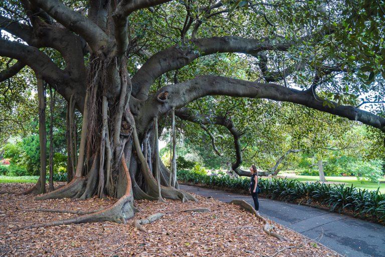 Botanic Garden Sydney