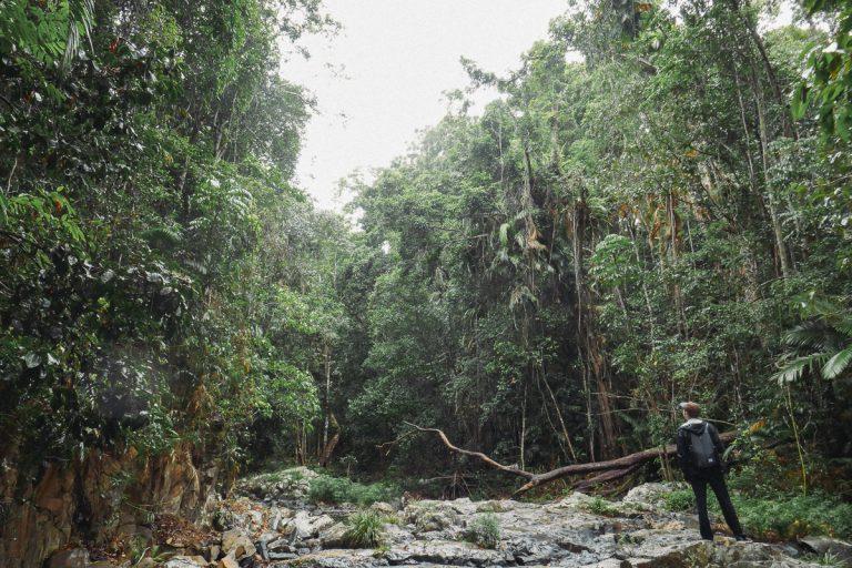 Kuranda Walk
