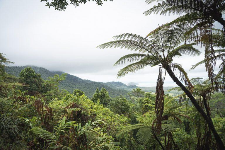 #2 Daintree Rainforest & Cape Tribulation