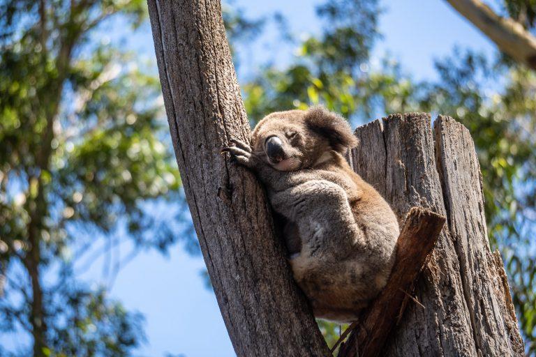 #17 Strandschönheiten und Koalas in Nambucca Heads & Port Macquarie