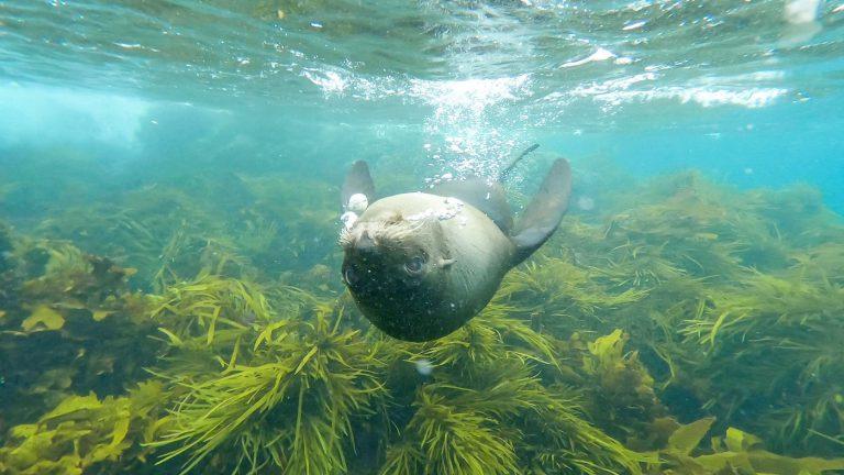 #22 Die Seebären von Montague Island in Narooma