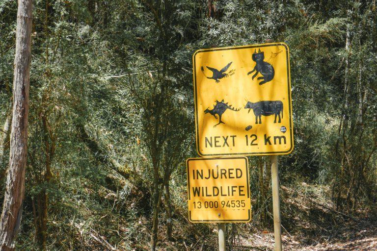 Cape Otway - Roadtrip