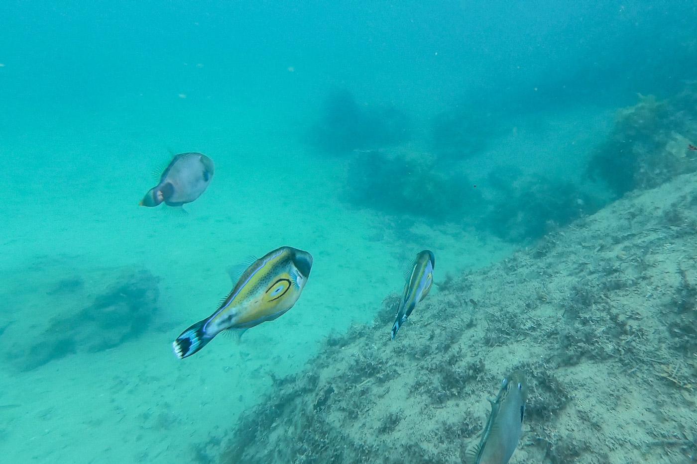 Port Noarlunga Snorkeling